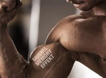 Muskel-Memory-Effekt