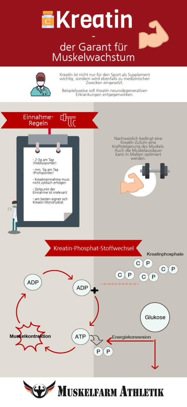 Infografik über Creatin